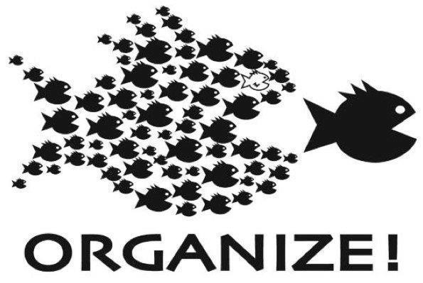 FISH ORGANIZE